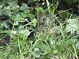 Small animal hiding in the undergrowth